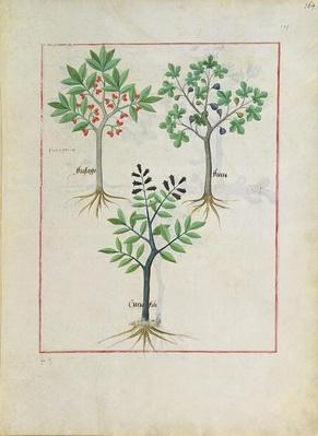 Ms Fr. Fv VI #1 fol.164r Illustration from the 'Book of Simple Medicines' by Mattheaus Platearius