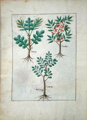 Ms Fr. Fv VI #1 fol.163v Illustration from the 'Book of Simple Medicines' by Mattheaus Platearius
