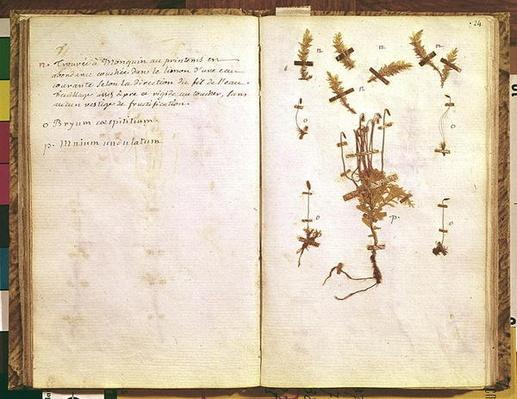 Page 24 from a Herbarium