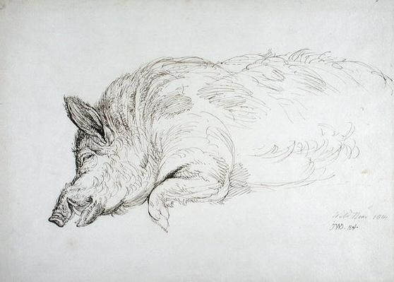 A Wild Boar, Asleep or Dead, 1814