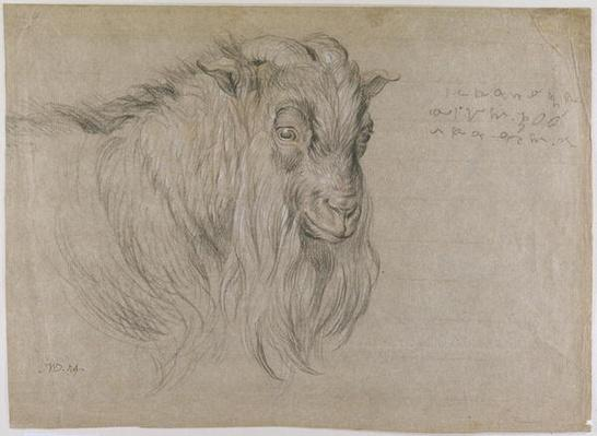 Study of the Head of a Ram