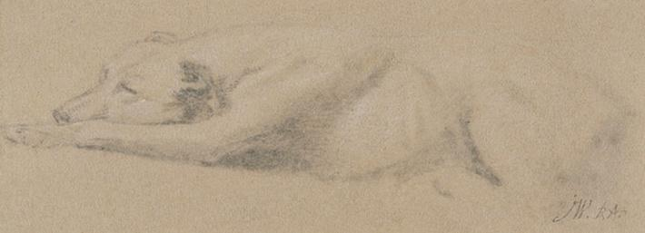 Study of a Sleeping Dog