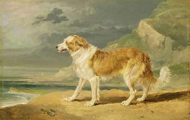 Rough-coated Collie, 1809