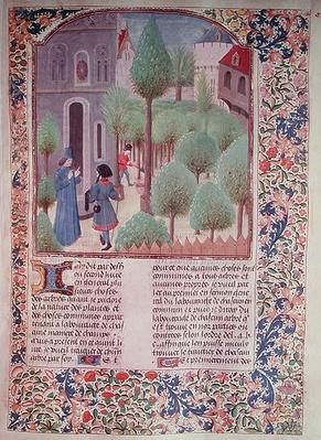 Ms 5064 fol.105r Planting trees, from 'Livre des Prouffitz Champestres' by Pietro de Crescenzi