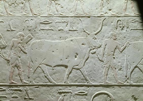 Herdsman leading a bull, detail from the Mastaba of Akhethotep, from Saqqara, Old Kingdom, c.2500 BC