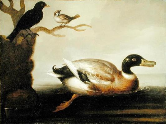 Mallard Duck and Other Birds, c.1700