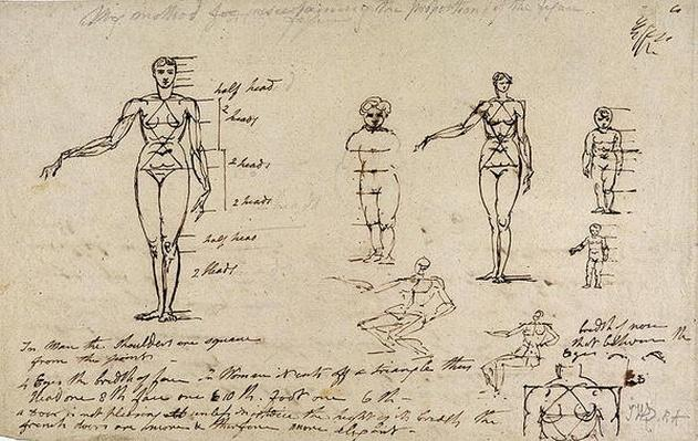 Studies of anatomy with measurements and writing