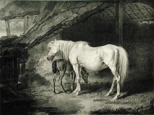 Primrose and Foal, from 'Celebrated Horses', a set of fourteen racing prints published by the artist, 1823-24