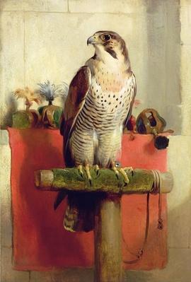 Falcon, 1837
