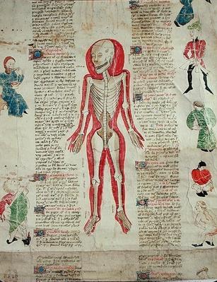 Skeleton, from 'De arte phisicali e de cirugia' by John Ardene, 1412