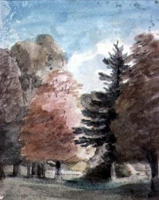 Study of Trees in a Park
