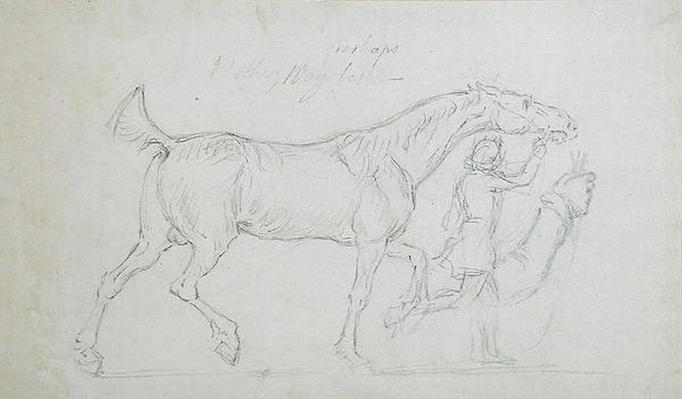 Man Leading a Trotting Stallion to Right