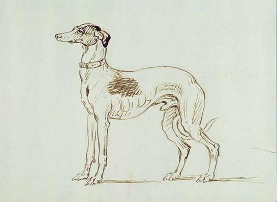 A Greyhound, Facing Left