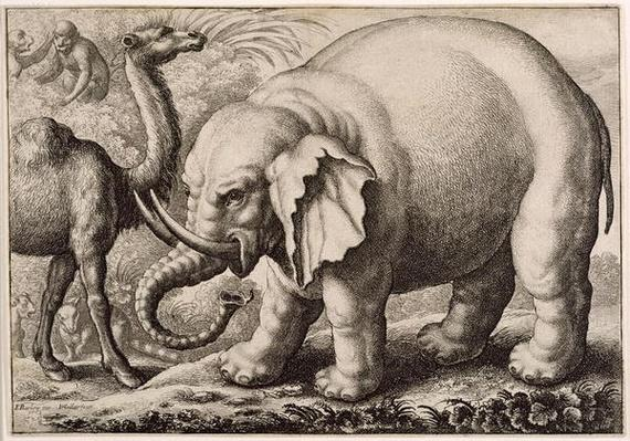 An Elephant and a Camel, engraved by Wenceslaus Hollar
