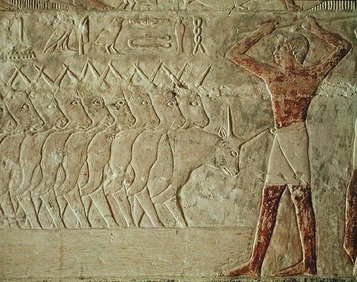 Relief depicting a drover encouraging a group of cattle, from the Mastaba of Mereruka, Old Kingdom