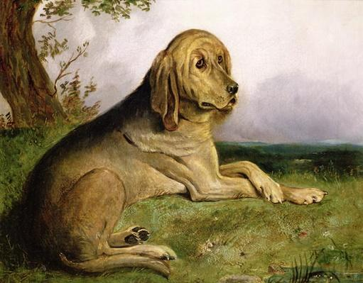 A Bloodhound in a Landscape