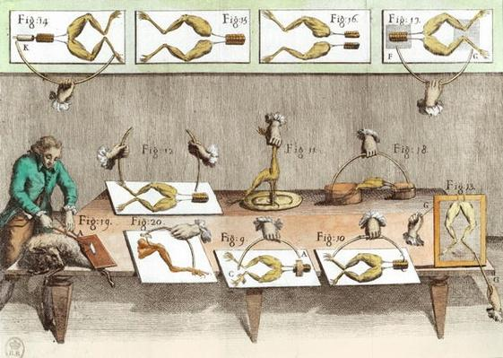 Experiment on frogs, illustration from 'De viribus electricitatis in motu muscumari'