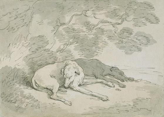 Greyhounds Asleep,