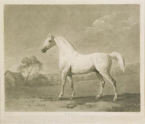 Mambrino, after George Stubbs, 1788