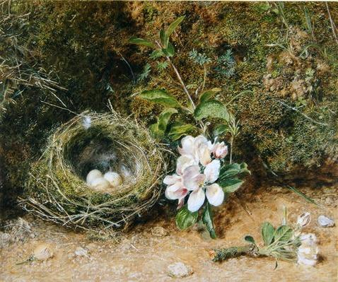 Bird's Nest with Sprays of Apple Blossoms, c.1845-50