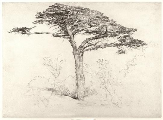 Old Cedar Tree in Botanic Garden, Chelsea, 1854