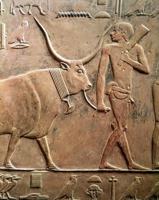 Relief depicting a peasant leading a cow to sacrifice, from the Mastab of Ptah-Hotep and Akhti-Hotep, Old Kingdom