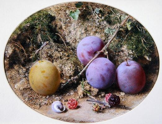 Plums and Mulberries, c.1860