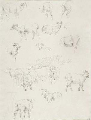 Flock of Sheep, after 1794