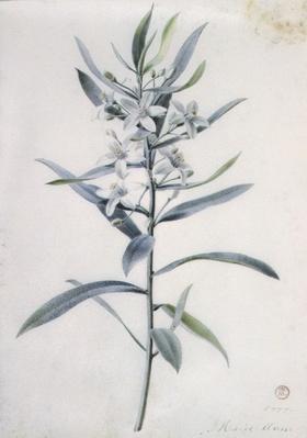 Flower Pieces, 18th century