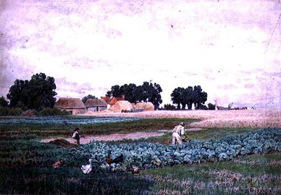 Cabbage Field and Farm