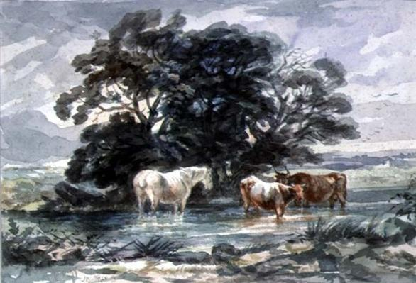 Landscape, two cows and a horse standing in water,