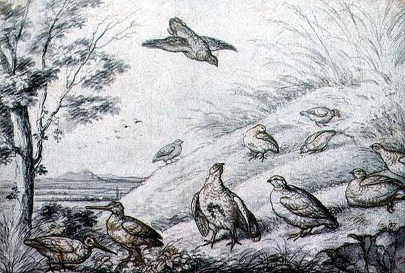 Partridges and Snipe, 17th century