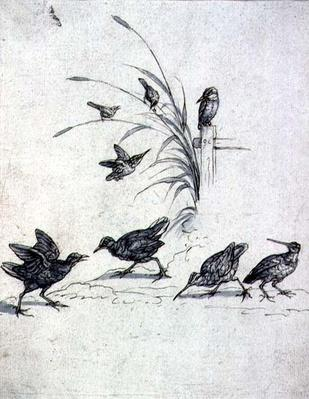 Kingfishers, Curlew and other Birds, 17th century