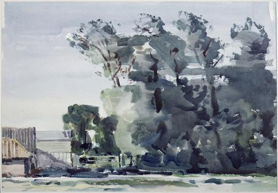 Trees - Dawn