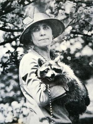 Grace Anna Goodhue Coolidge (1879-1957) with pet raccoon 'Rebecca' (b/w photo) by American Photographer, (20th century)