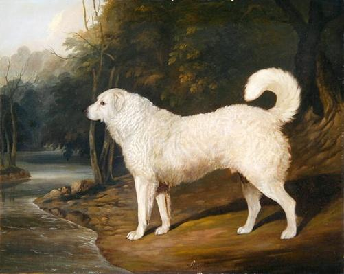 Portrait of a Dog, Ross, 1836