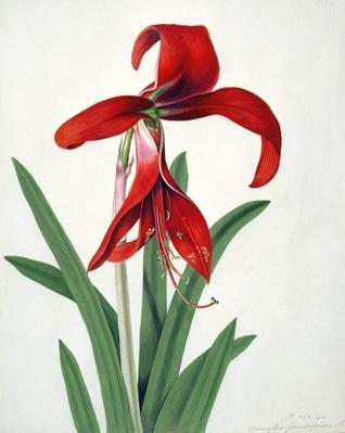 Flower Study,