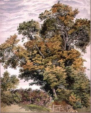 Study of an Oak Tree, 19th century