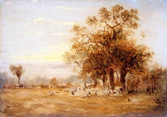 Sheep Grazing, 1835