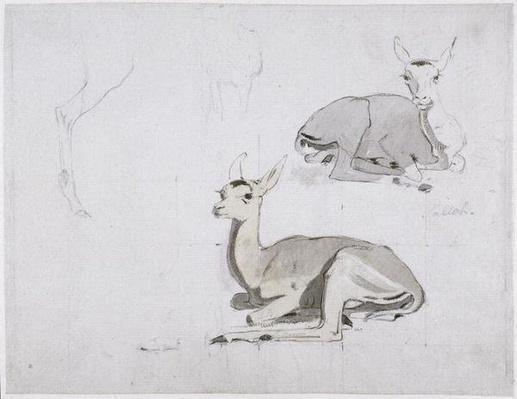 Studies of young Pallah Deer Resting, c.1802