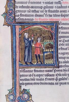 Ms 426 fol.135 Teaching the best way of preserving pears, from 'Le Miroir de la Nature' by Vincent de Beauvais