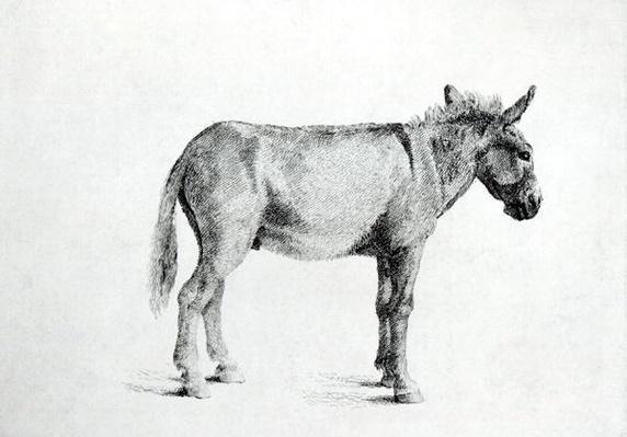 Donkey 1766