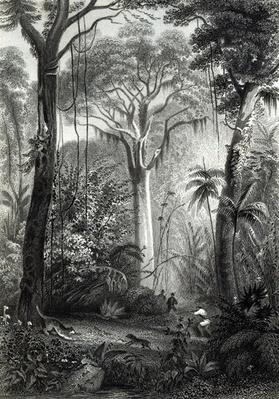 Scene in a Brazilian Forest engraved by J.Bishop
