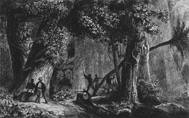 Forest Opening from 'Bresil, Columbie at Guyanes', by Ferdinand Denis and Cesar Famin 1839