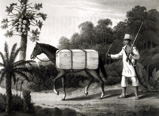 A Cotton Carrier, from 'Travels in Brazil', 1819