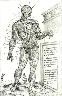 Vascular System according to Charles Etienne, from 'De d'issectione partium corporis humani libri tres', 1545