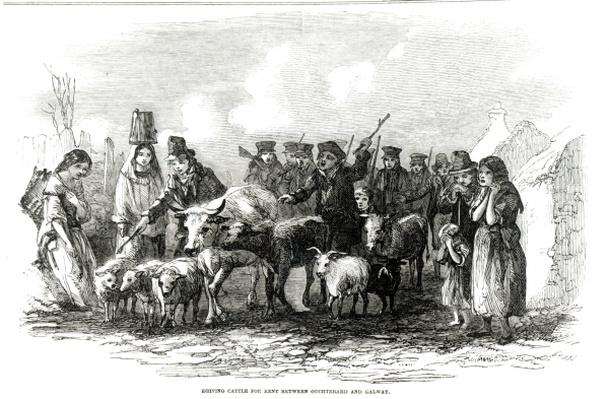 Driving Cattle for Rent between Ouchterard and Galway, from 'The Illustrated London News', 29th December 1849