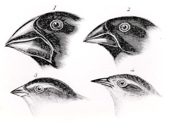 Darwin's bird observations