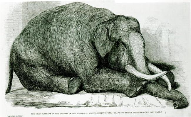 The Dead Elephant at the Gardens of the Zoological Society, Regents Park, from 'The London Illustrated News'