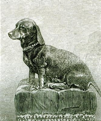 The Dog Jacob, from 'The Illustrated London News', 3rd November 1883